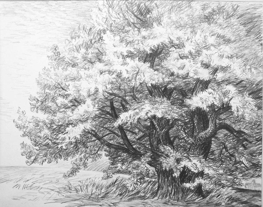 Vitaliy gubarev les chênes crayon dessin 1985