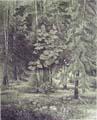 Vitaliy Gubarev: 'Forest paradise'. Etching. 1994