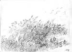 Vitaliy Gubarev: 'Summer'. Pencil drawing. 2003