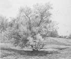 Vitaliy Gubarev: 'Willow in may'. Pencil drawing. 1986